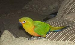 Excellent pet -- Very Cute and lovbable Friendly Bird Eight months Old Our family is moving can't take her with us , Hate to part. Sold in pet shops for $699 plus tax or more. Please call or Email 647 990 6814