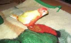 15% OFF ALL TOYS! 10% OFF ON ALL CAGES!   BEAUTIFUL BIRDS  from $19.99 and up!NEW HAND-FED BABY BIRDS COMING SOON!  PLEASE CALL US TO PLACE YOUR ORDERS (ALL  BREEDS available. We also accept special orders)) FINCHES COCKATIELS LOVEBIRD RINGNECKS CONURES