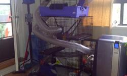 Two ferrets 1- 30 months old (female) and 1 - 10 months old (male) Complete with two cages, a playpen and sixty feet of tunnels. All food, Ferret supplies for health, tons of toys, blankets and towels for bathing. MUST SELL DUE TO TRAVEL SCHEDULES