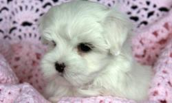 i would really want a maltese puppie i want one that is like new born this is for my daughter she really wanted one i want somthing like my pictures