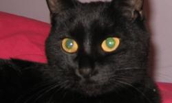 Breed: Domestic Short Hair-black   Age: Young   Sex: F   Size: M Spayed, Vaccinated, DOB October 7, 2010. Kali was rescued from an industrial area where she was most likely dumped near a feral cat colony. Obviously this arrangement did not work out and