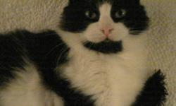 Breed: Domestic Long Hair-black and white   Age: Young   Sex: M   Size: M Neutered, Vaccinated, DOB September 1, 2009. James Potter is a loving boy with lots of energy and curiosity. He loves to play, jump and explore, but when he decides it is time to