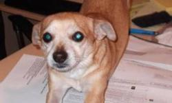 Breed: Chihuahua   Age: Young   Sex: M   Size: S Tyson is an adorable 4 year old Chihuahua who came to Precious Paws when his previous owner was not caring for him properly. Since coming in rescue Tyson has been fully vetted, including neutered and an